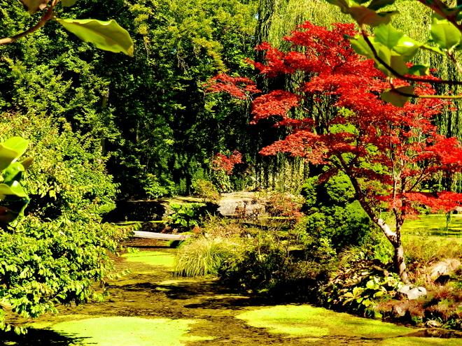 jardin japonais 2 ile de france belle france beaute de france paysages de france. Black Bedroom Furniture Sets. Home Design Ideas